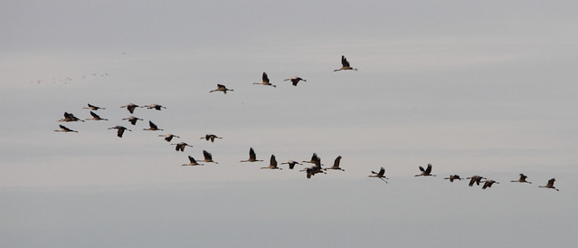 Cranes4_23Nov