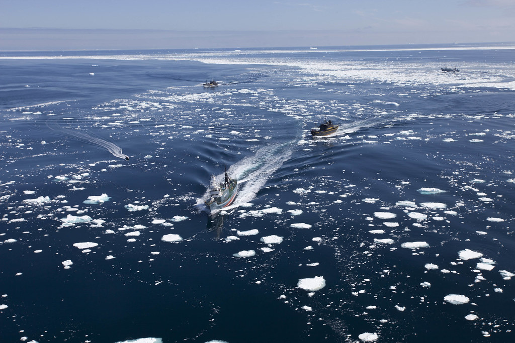 110101_Japanese_whaling_fleet_on_the_run_from_Sea_Shepherd_(BV8024)