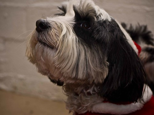 Christmas Party 2011 | by Chadkirk Dog Training Club