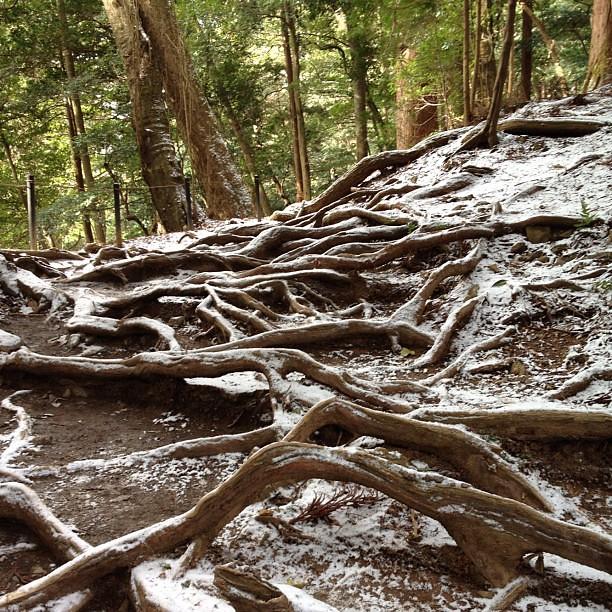 山道を振り返って: 木の根道。りゅうりゅう。