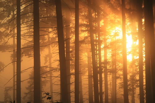 trees mist nature silhouette canon washingtonstate t1i matthewreichel