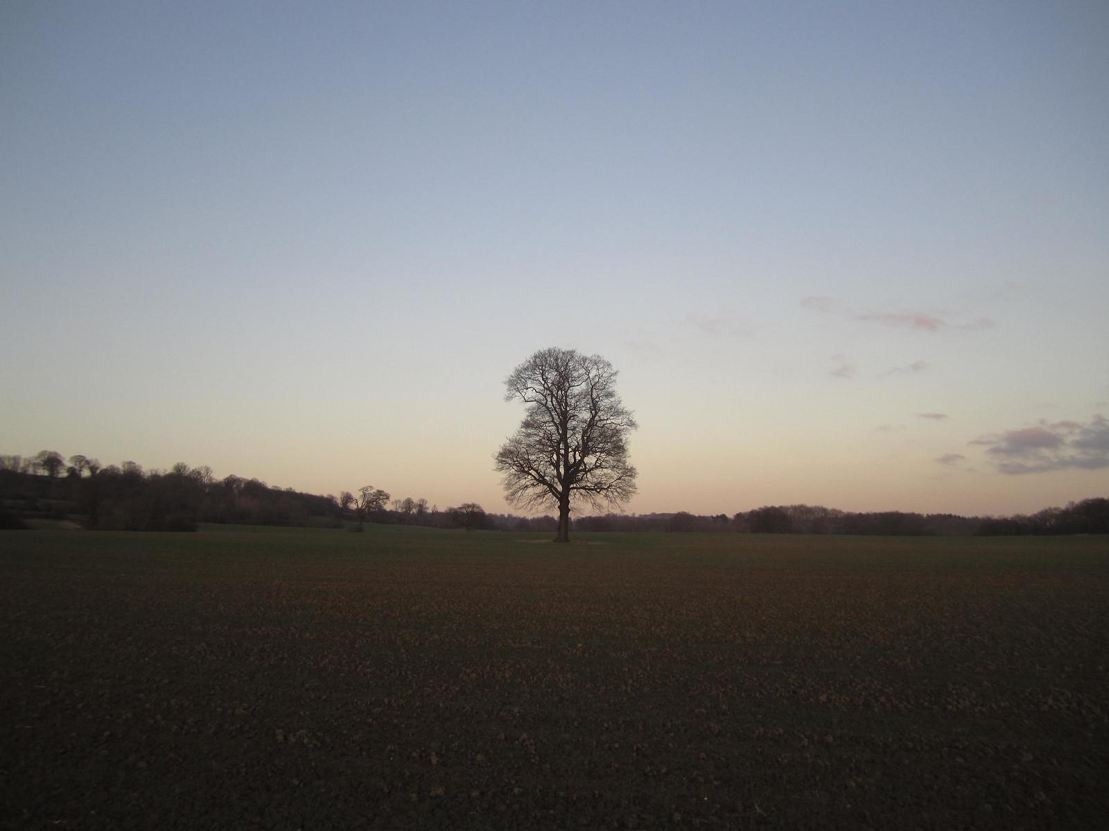 Dusk 14/366 Sevenoaks Circular TOCW Free walks 21