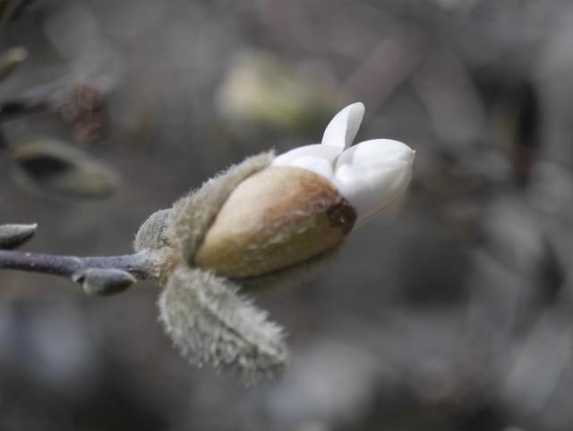 火, 2014-04-01 13:24 - Brooklyn Botanic Garden