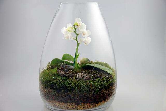 Orchid Terrarium Orchid Terrarium Photo By Rebecca Bullen