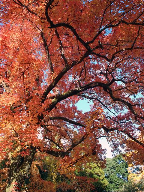 Late Autumn #7