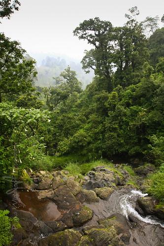 sunset tree water forest sunrise river indonesia landscape java mount bromo jawatimur sedaengtosari