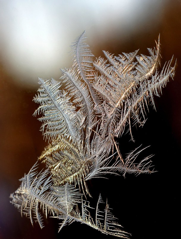 Nature's Song Etched in Glass & Light...