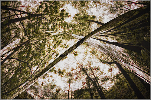 fisheye warp spring harrimanstatepark victorytrail nature outdoors harrimanpark city abstract unitedstates landscape newyork 2016 southfields us sun sunset