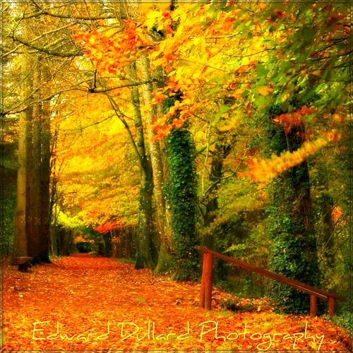 wood autumn trees kilkenny ireland painterly fall nature leaves forest automne landscape herbst eire impressionism magical photoart enchanted irlanda ierland edwarddullardphotography kilkennyphotographicsociety bbng