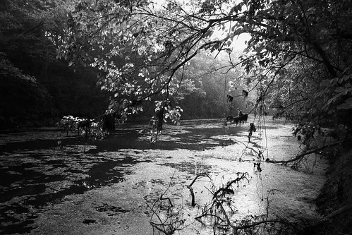 morning trees blackandwhite bw tree nature water manipulated landscape louisiana bayou batonrouge canonefs1022mmf3545usm 22mm mrgreenjeans gaylon artistpicks gaylonkeeling