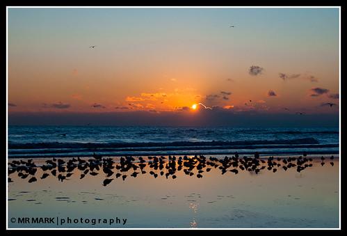 sun seagulls reflection beach water birds sunrise florida wells fl rays ritzcarlton sunrays ritzcarltonhotel ameliaisland