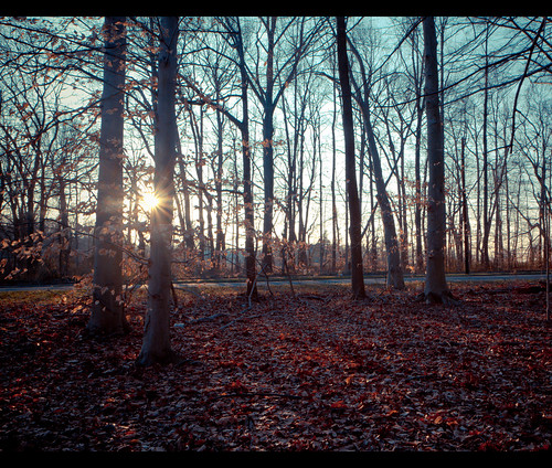 trees sun beautiful leaves forest canon 7d rays 365 sunrays goldenhour lightroom 365project canoneos7d canon7d