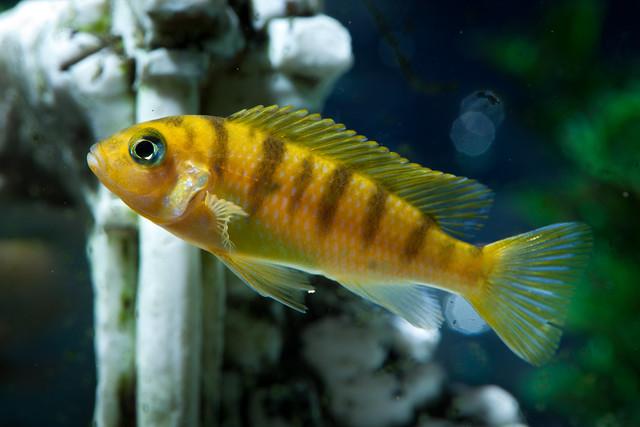 Fishies 2295