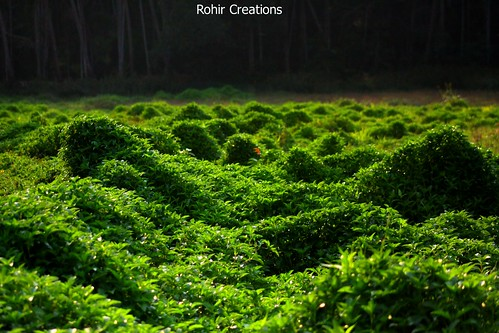 Whats that ????   by Rohir Creations