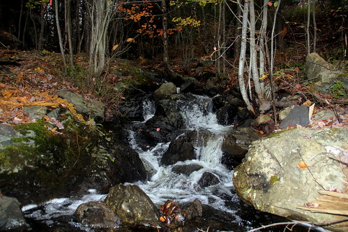 canada nature water beauty outdoors stream newbrunswick brook saintjohn lilylake rockwoodpark