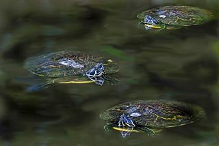 Turtle Dreams | by 2Deye