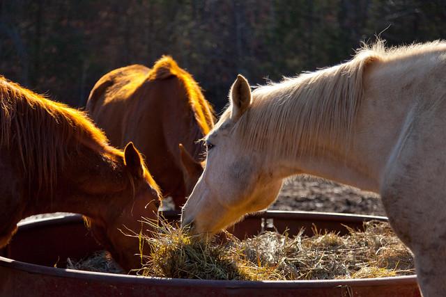 Horses 9793