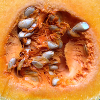 butternut squash closeup   by woodleywonderworks