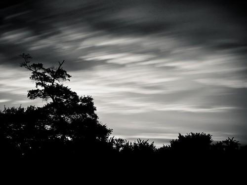 sky bw motion silhouette © treeline garyburke bwnd110 10stopfilter olympuse620