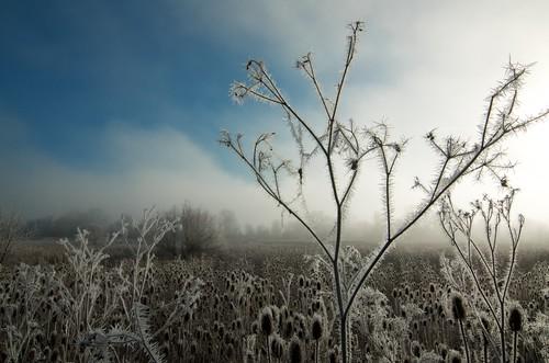 morning field grass frost vapor