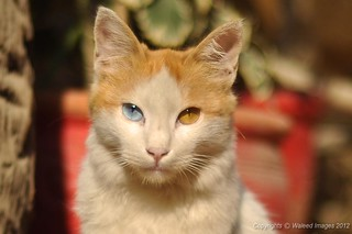 Cat with a Lens?   by Waleed.Ahmed