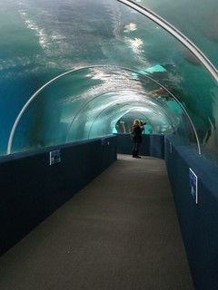 Greater Cleveland Aquarium | Now open in the FirstEnergy ...