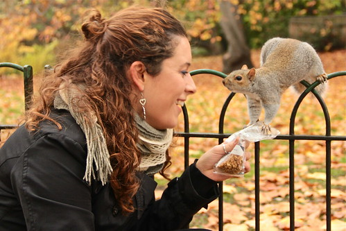 London Squirrel in St. James Park | by Michela Simoncini