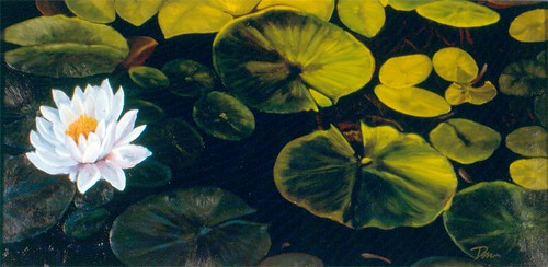 Lily Pads by David Derr | by David_Derr