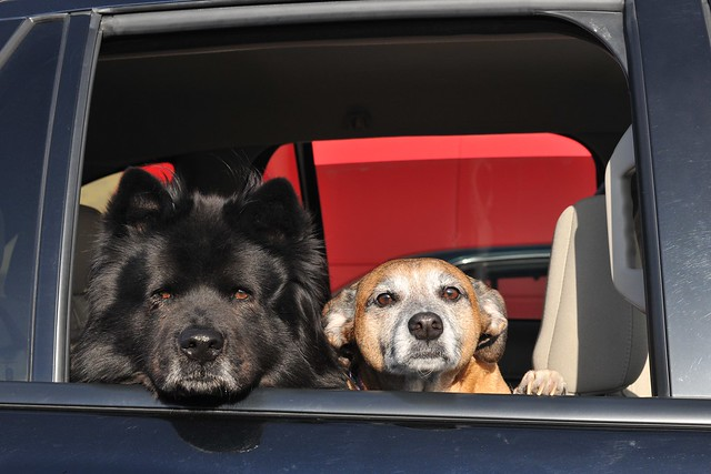 Car Canines