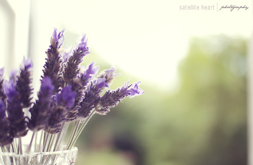 camera sunset summer sun blur flower love floral pretty afternoon dof purple bokeh