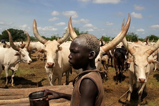 A member of the Mundari tribe stands amongst cattle in Terekeka, South Sudan. Credit: Jared Ferrie/IPS | by IPS Inter Press Service