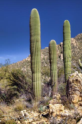 cactus art nature forest landscape desert outdoor fine wilderness saguaro