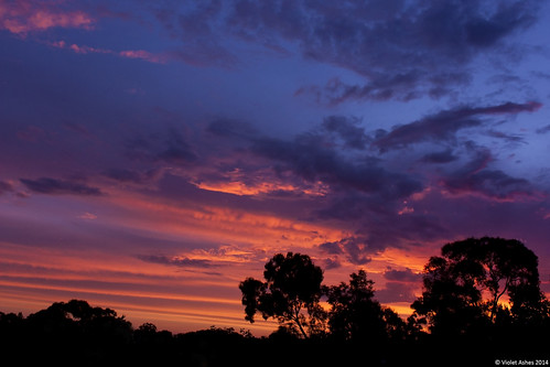 sunset silhouette canon sunsets australia southaustralia 2014 gawler sunsetphotography canoneos450d sunsetaday violetashessunset corpril violetashessunsettumblrcompost79351158630sunset70