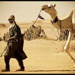 Camels Shepard !