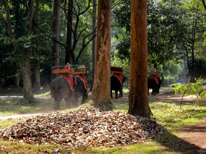 Elephants at Angkor