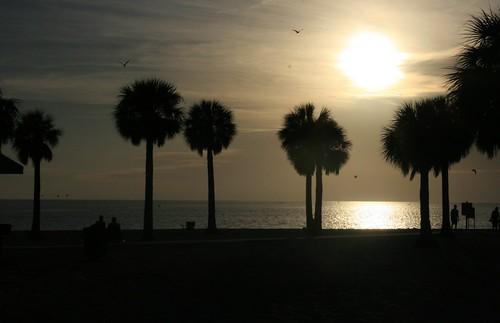 sunset sky beach gulfofmexico florida palmtrees waterfowl waterscape pineislandbeach