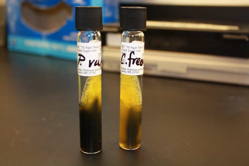 Aa, H2S Production On Tsi  On Left, Proteus Mirabilis, On   Flickr-5334