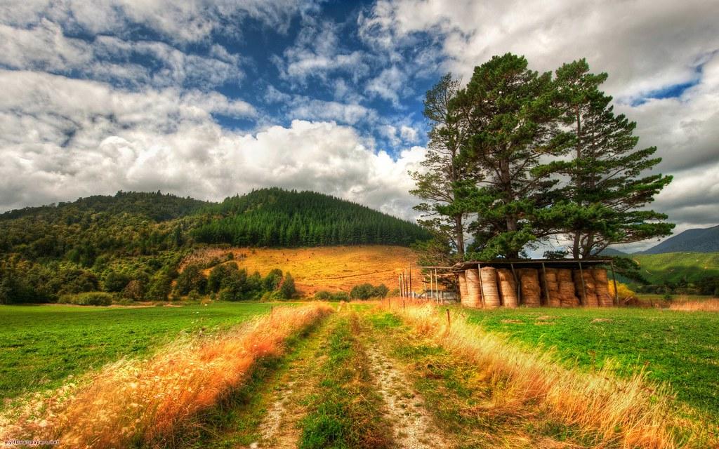 Grasses Of New Zealand 1920x1200 Free Image Slike Wallpape