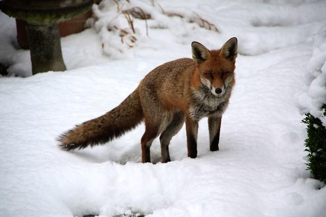 ITFA - It's That Fox Again... 2012