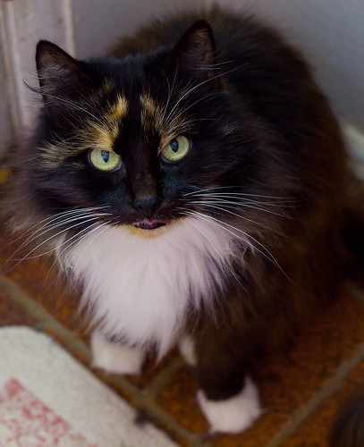 Gracie Desperately Needs a Home! | by DDFic