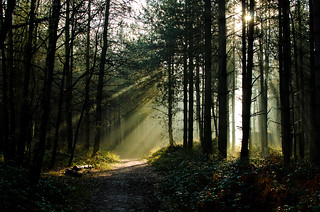 Forest Sunlight | by scotbot