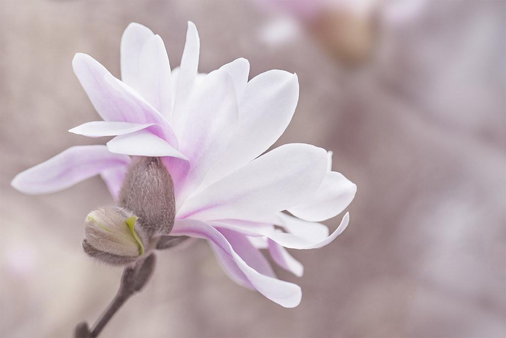 Untitled Lisa Gordon Flickr