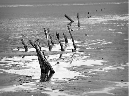beach tide low nz otago poles waikouaiti