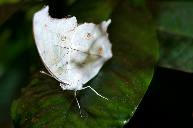Butterfly Palace 8990