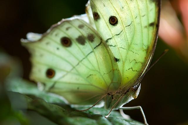 Butterfly Palace 8994