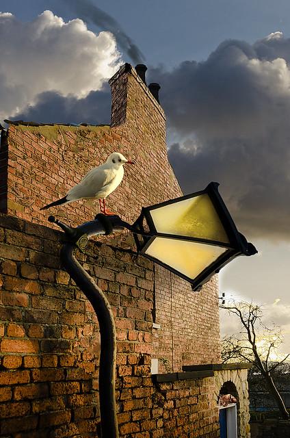 Bendy Lamp [Explored]
