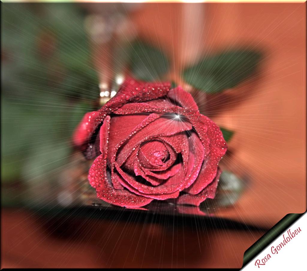 La Flor Más Bella Del Mundo Rosa Gondolbeu Flickr