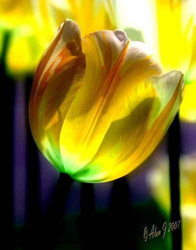 ny newyork flower canon 7d albany upstatenewyork washingtonpark capitaldistrict ringexcellence 100mmmacrof28lisusm musictomyeyeslevel1