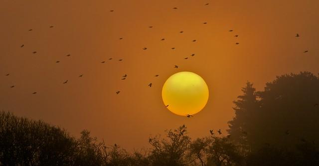 frosty, misty, birdie dawn