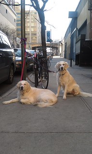 Daily Deli Dogs 7 February 2012 | by epc